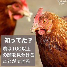 #100種類#鶏#アニマルライツ#動物福祉#vegan#ヴィーガン#vegetarian#ベジタリアン#菜食#チキン#肉食#肉#鶏卵#卵#反対