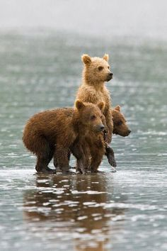 Waiting for mama bear. Cute Creatures, Beautiful Creatures, Animals Beautiful, Nature Animals, Animals And Pets, Cute Baby Animals, Funny Animals, Animal Pictures, Cute Pictures