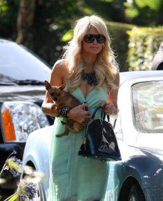 Paris Hilton: tops entre las tops, la mascotita más famosa de la farándula es el pequeño chihuahua llamado Tinkerbell, que acompaña a su dueña a donde quiera que vaya,