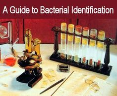 Medical Laboratory and Biomedical Science: A Guide to Bacterial Identification