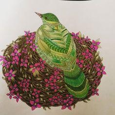 Adult Coloring Books Pencil Bird Colouring Techniques Wonderland Tropical Instagram Johanna Basford