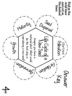 Plant reproduction worksheet | teaching aid | Pinterest | Worksheets ...