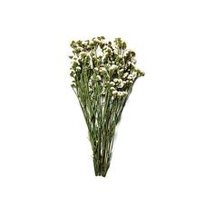 """16"""" Statice Bunch Dried Fillers ($25) ❤ liked on Polyvore featuring home, home decor, floral decor, flowers, filler, other, plants, decorative accessories, white and flower stems"""