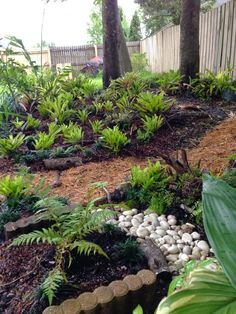 The Rainforest Garden: Turning a Garden's Problems into Personality