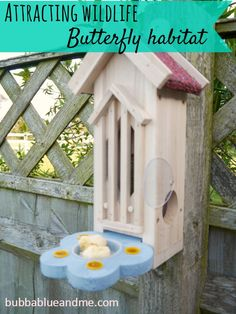 Butterfly habitat - use sugar and water solution to attract, plus ripe fruit