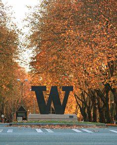 UW's Memorial Way during the fall!
