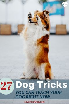 types of dog Regardless of what type of dog you have, heres some of our favorite tricks you can teach them. Wed recommend focusing on one trick at at time until your dog masters that trick before moving on to the next one. Best Dog Toys, Best Dogs, R Dogs, Dogs And Puppies, Dog Training Techniques, Types Of Dogs, Training Your Dog, Training Tips, Dog Hacks