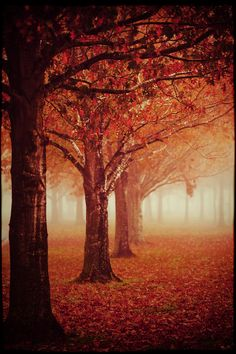The Burning Forest by Katya Horner on 500px