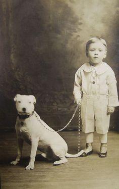 1908 Bull Terrier, colección C.H.