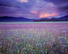 Central Idaho Spring Photograph  - Central Idaho Spring Fine Art Print