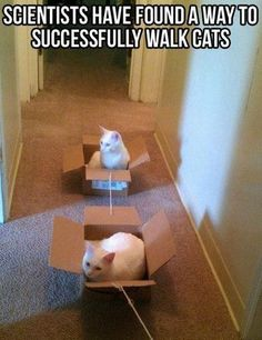This is still funny, even though our cats have no problem walking on a leash.