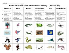 Animal Classification cut and paste: Sort mammals, fish, reptiles, amphibians, birds and invertebrates.  Two versions of this activity are included: 1. Students sort pictures and characteristics of the animal categories 2. Students are given the characteristics and sort picture examples of the animals into the correct categories.