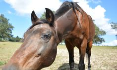 How kids see horses :)