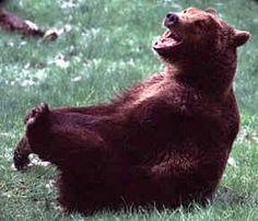 Laughing bear.