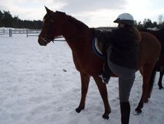 Learn How to Get On a Horse to Go Horseback Riding: Get in Position to Get On