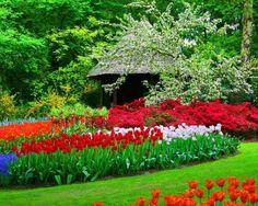 "Európa virágoskertje: Keukenhof, a holland ""konyhakert"" Flowers For You, Plantar, Amazing Flowers, Nice Flower, Landscape Architecture, Beautiful Gardens, Flower Power, Cool Photos, Beautiful Places"