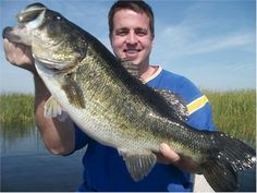 When looking for the best bass lures to take fishing, review this list of must have bass lures. The best bass lures are explained in detail here. Check it out!