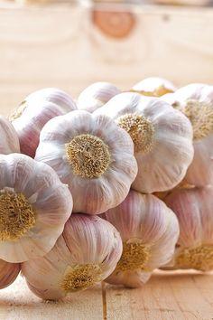 The famous French Purple Garlic, pretty mild but also intense! The famous French Purple Garlic, pretty mild but also intense! Fruit And Veg, Fruits And Vegetables, Como Plantar Pitaya, Purple Garlic, Fresco, Onion Leeks, Onions, Garlic Chives, Spices And Herbs