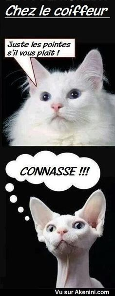 Humour Photos fun Animaux - Akenini.com