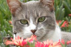 Grey Cats | Catnip Camera -