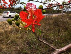 Jardin tropical nouméa   Voyage en Nouvelle Calédonie