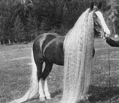 The Oregon Wonder Horse <3