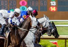 Kentucky Derby Day at Lone Star Park featured not only great thoroughbred racing, but plenty of bright, colorful, stylish hats. Book Bar, Grand Prairie, Thoroughbred Horse, Derby Day, Stylish Hats, Kentucky Derby, Horse Racing, Lonely, Horses