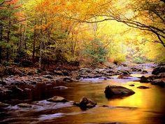 GREEN GARDENS: Autumn Reflections http://99greengardens.blogspot.com/
