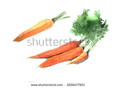 Set of watercolor carrots. Hand drawn illustration.