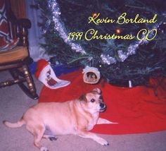 Original cover of my 1999 X-mas CD, recorded with various musicians 1994-1999, released for family & friends; Track listing:  1. Do Anything; 2. C'mon Eileen; 3. Canada; 4. Journey; 5. Russian Roulette; 6. Smooth Legato Runs; 7. Odiame; 8. Spaghetti & Meatballs; 9. Damaged (live); 10. Fireball; 11. Ian Has Passed Out/Say You Like It (live); 12. New Year's Eve (unfinished demo); 13. Fly On/Doin' Time (unfinished demo); 14. That's What You Get (unfinished demo).