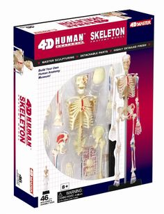 Build your own human anatomy model of the skeleton! This exceptionally detailed, model contains 46 detachable, hand-painted medical education-quality organ Human Skeleton Model, Human Skeleton Anatomy, Brain Models, Science Models, Human Anatomy Model, Anatomy Models, Vbs Themes, Rainbow Resource, Science Fair Projects