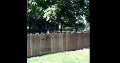 Hilarante inauguration de sa nouvelle clôture! http://rienquedugratuit.ca/videos/hilarante-inauguration-de-sa-nouvelle-cloture/