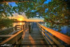 Stuart Florida Sunset Boardwalk Under Mangrove Tree
