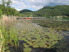 Mein erstes Mal im veganen Hotel Little Miss, Austria, Vineyard, River, Mountains, Outdoor, Outdoors, Outdoor Games, Outdoor Living