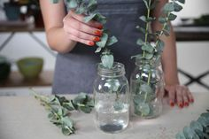 What is the eucalyptus plant, can you grow it, and what is it used for? This article covers all the answers to these questions. Eucalyptus Plant Indoor, Eucalyptus Centerpiece, Eucalyptus Shower, Eucalyptus Bouquet, Eucalyptus Oil, Eucalyptus Wedding, Indoor Water Garden, Indoor Plants, Indoor Gardening