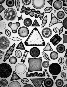 The Designer Who Peered Into Microscopes and Saw High Art | <em>Archetype of Individuality</em>, 1933 | Credit: Courtesy Steven Kasher Gallery, New York | From Wired.com