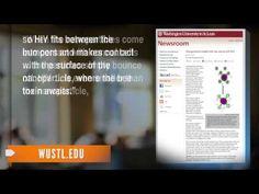 Scientific Breakthrough! Bee Venom Can Kill HIV, Study Says... - YouTube. It also kills lyme disease..
