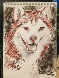 Another Husky Drawing with Conte Crayons