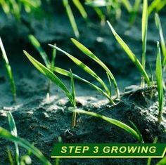GrassGrow™ Biodegradable Grass Seed Protector Mat – Sunsdale Indoor Garden, Outdoor Gardens, Grass Seed Mat, Grass Rolls, Growing Grass, Garden Solutions, Green Lawn, Back Gardens, Lawn Care