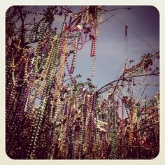 New Orleans...when beads are thrown from the parade floats many never reach the people as they are caught in the trees lining parade routes...they are beautiful and added to year after year...