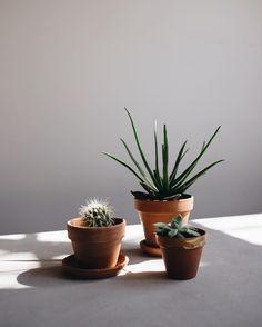 studio plants.