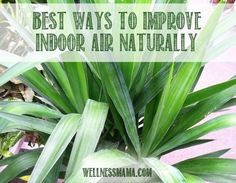 Indoor air can contain more toxins that outdoor air. Find out how to improve your indoor air quality naturally and inexpensively.