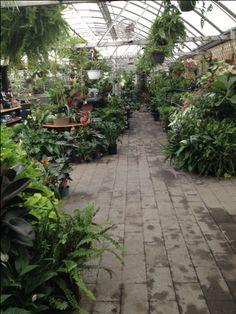 Our Greenhouse Garden, Plants, Garten, Lawn And Garden, Gardens, Plant, Gardening, Outdoor, Yard