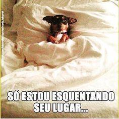 ❤️❤️ #cachorro #petmeupet #maedecachorro #paidecachorro #amocachorro #amoanimais #cachorroterapia #cachorroétudodebom #filhode4patas