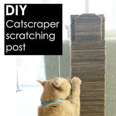 Cat posts on pinterest cat scratching post cat for Homemade cat post