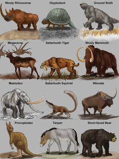 Image result for prehistoric mammals