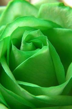 薔薇 素材 待ち受け バラ 壁紙 高画質 ばら 緑色の画像 プリ画像