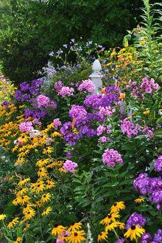"""Perennial Garden. Late Summer Garden. Phlox Paniuculata """"Laura"""" & Eva Cullum"""". Yellow Rudbeckia."""