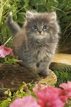 # animals # so cute and fluffy
