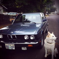 80s BMW 528 i  .  DALLAS SPEEDER .LATE 1980'S . Every cowboy has a great horse.  Aspen to Madison often.